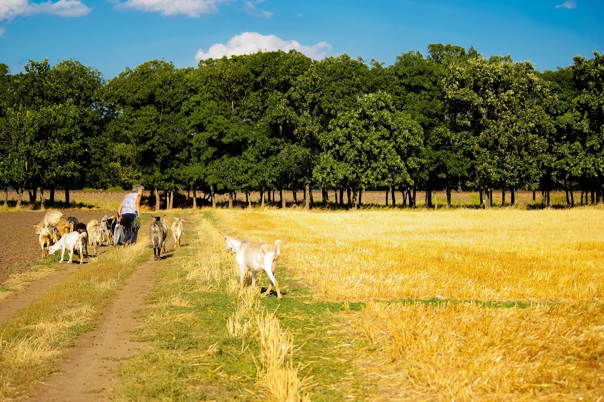 Bauernhof, Wiese, Tiere: Foto: Дмитрий Макаров / Pixabay (CC0)