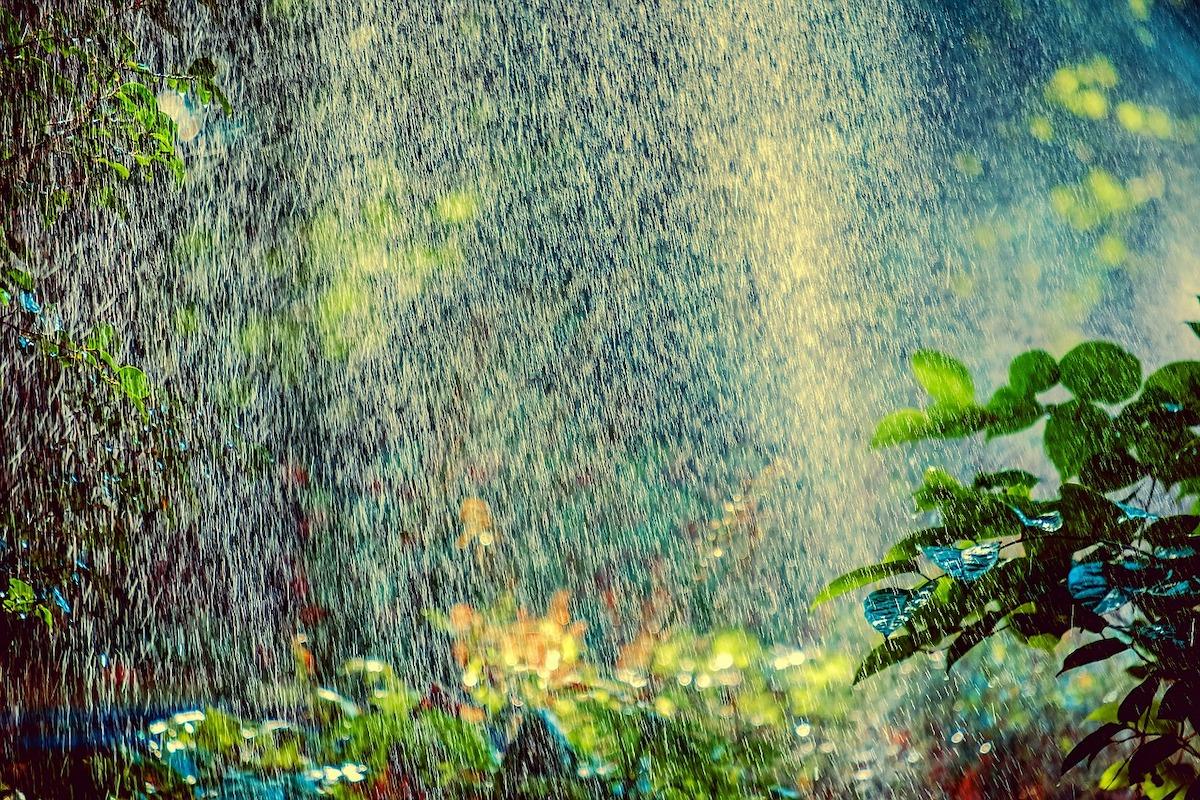 Bewässerung, Wasser, dezentrale Bewässerung, Regen