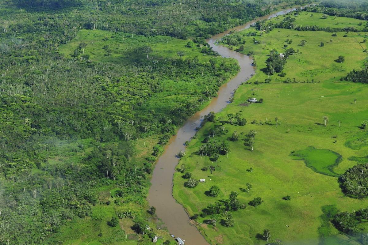Regenwald, Brasilien, Aufforstung,
