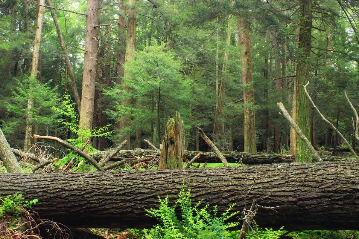 Spontaner Wald, Aufforstung, Klimawandel