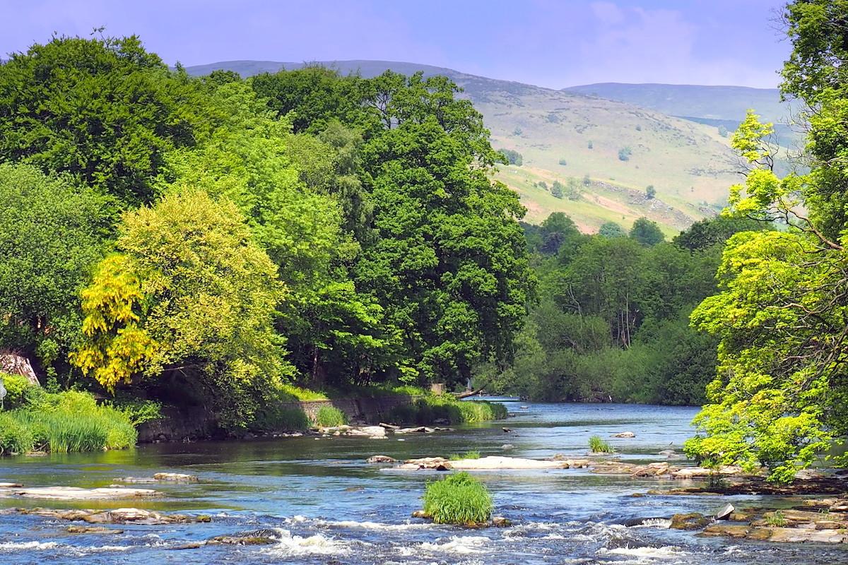 Fluss Dee in Schottland: Mehr Wald für mehr Lachse