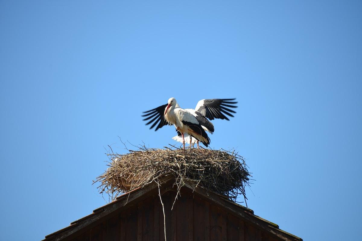 Storch, Dach, Naturschutz