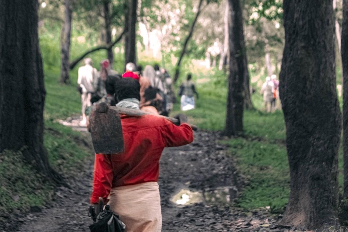 Indien, Wald