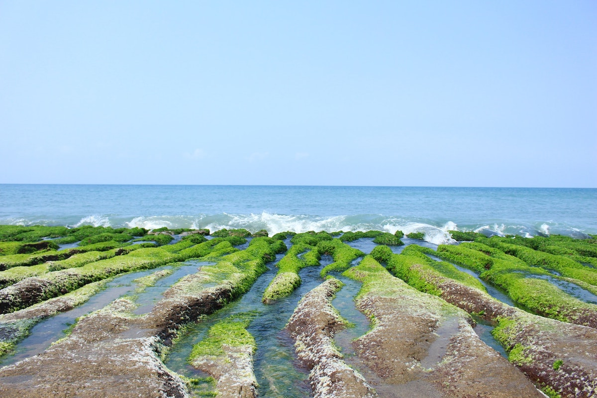 Algen, Meer
