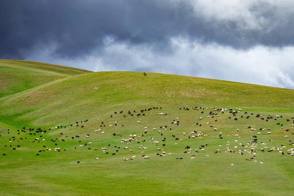 Mongolei, Landschaft