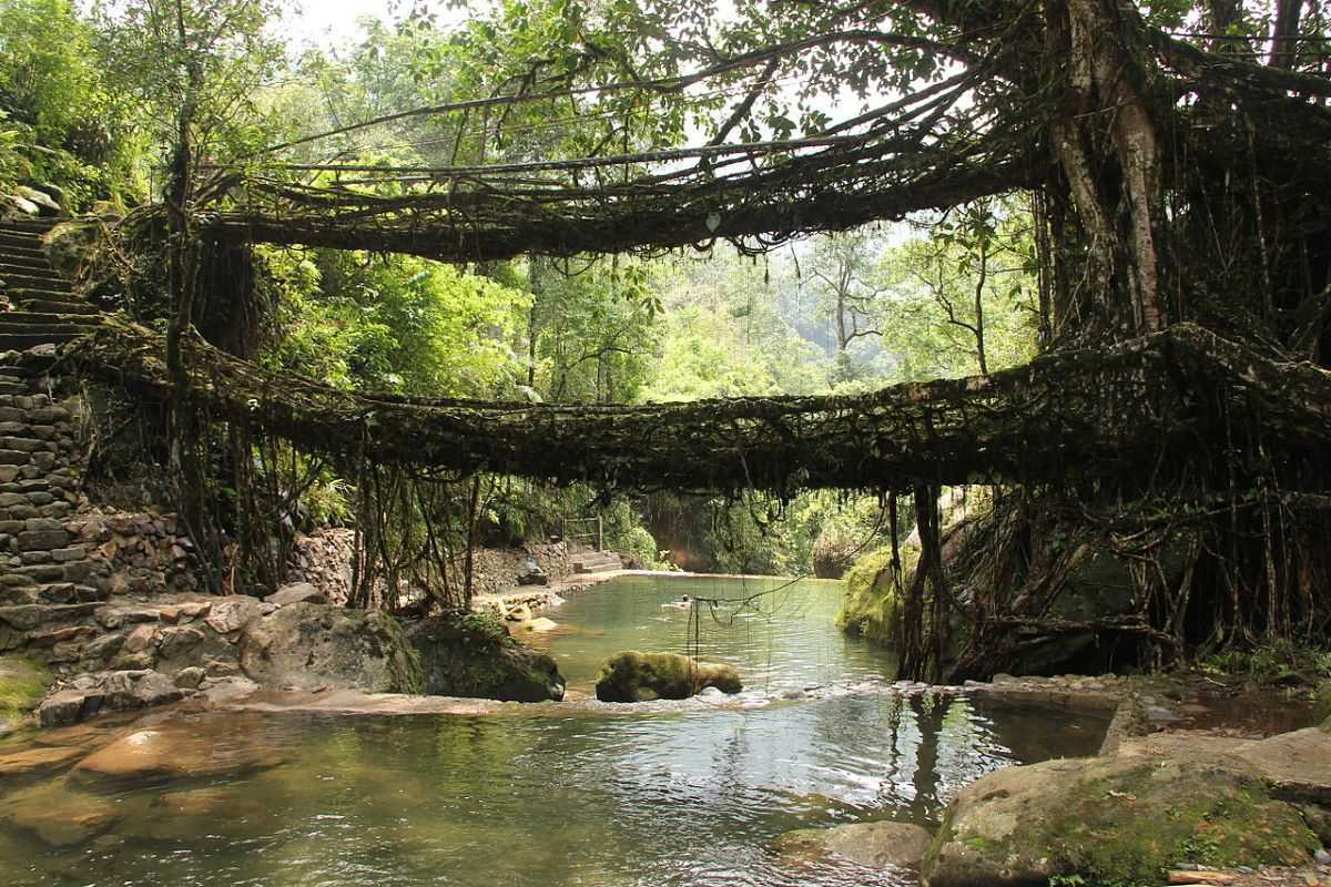 root_bridge-india-climate_change