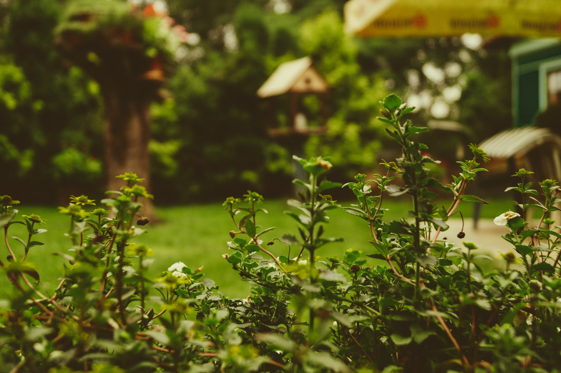 Garden. Photo: Martin Kníže / Unsplash (CC0)