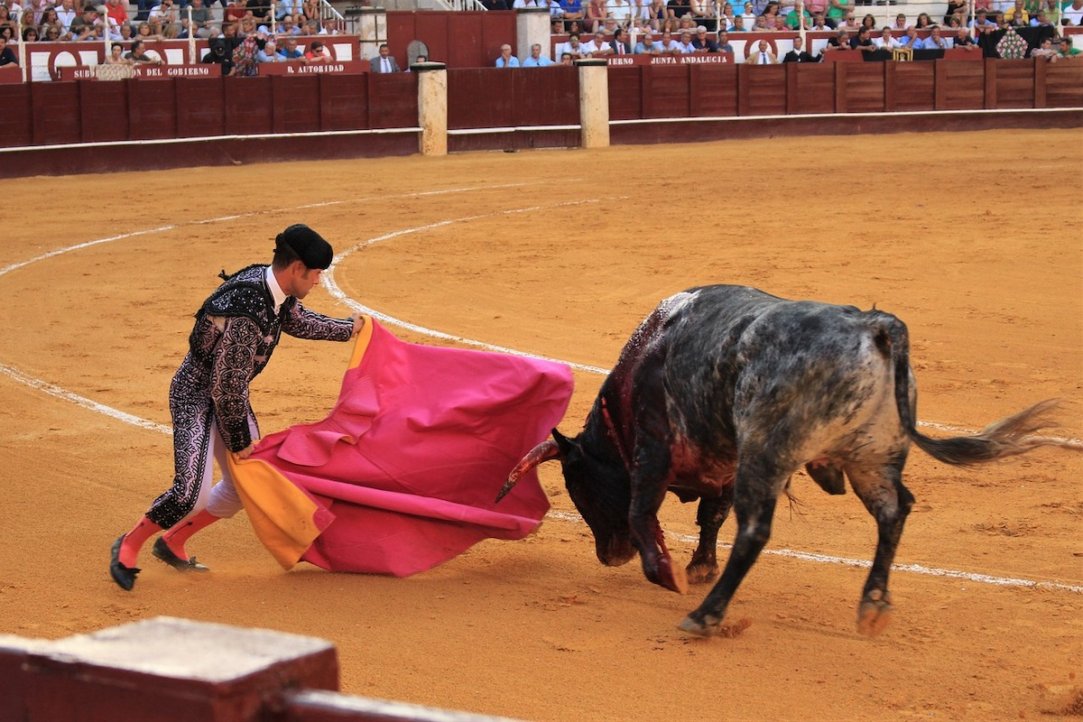 Bull fighting, bullfighting. Photo: sgrunden / Pixabay (CC0)