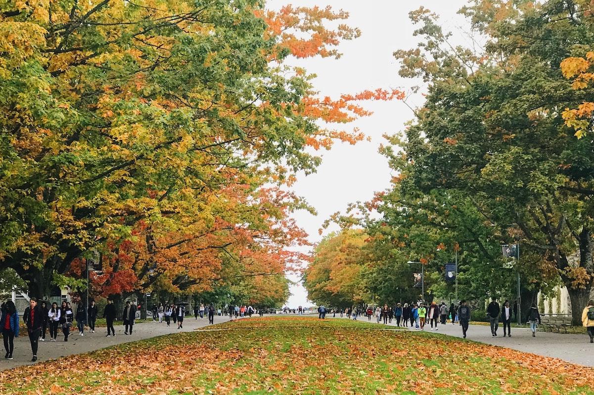 Vancouver, street, trees